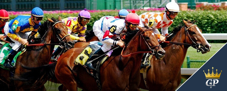 Breeders Cup Longshot Betting Predictions Horse Racing Odds