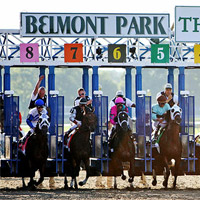 Belmont park racetrack racebook odds horse racing live betting lines