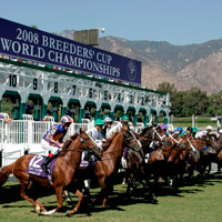 breeders cup odds sports on line betting