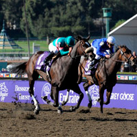Breeders Cup Marathon Betting Odds