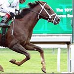 Vino Rosso Belmont Stakes Betting Odds