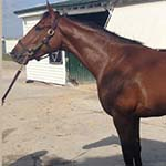 Gronkowski Belmont Stakes Betting Odds